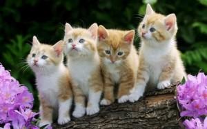 cute-kittens87