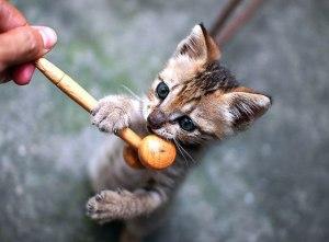 kitten19