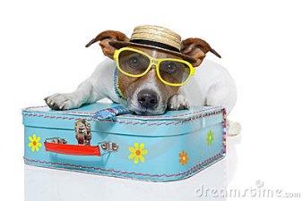 funny-dog-as-tourist-23896081